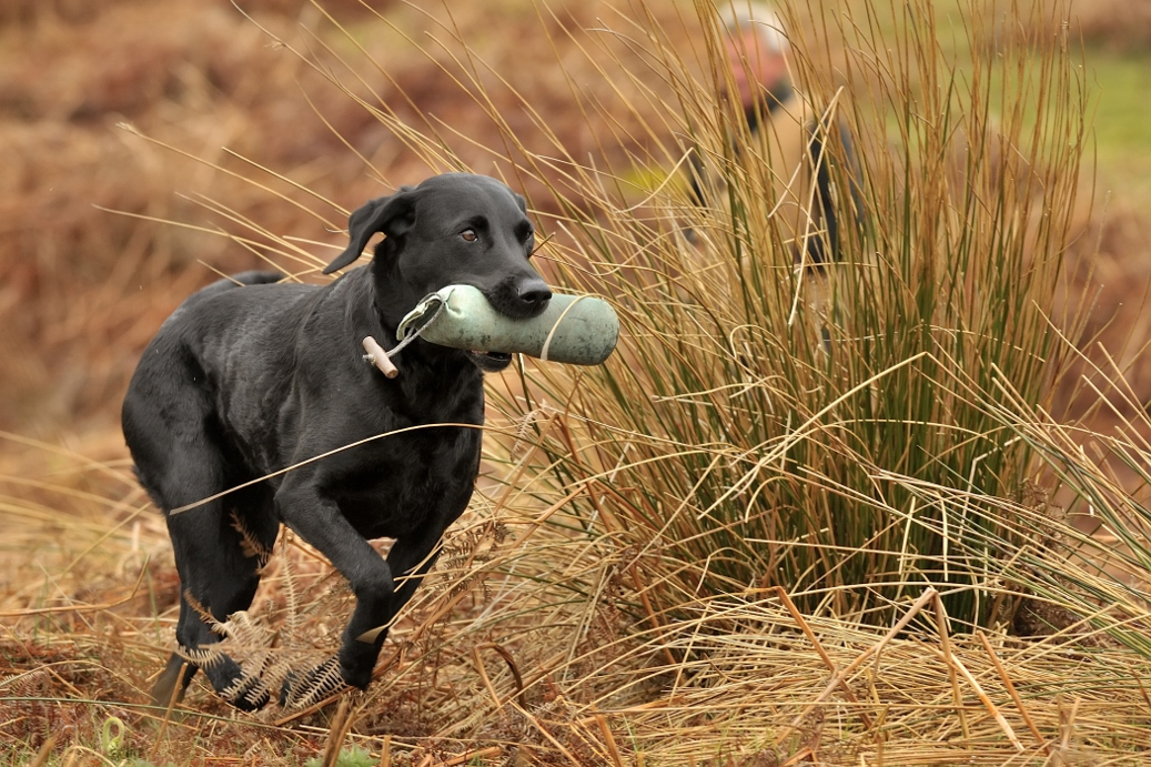 Images of working dogs, pet dogs, sporting and country scenes and people, shoot days, training days and dog walks.Wildlife, Birds, Mammals, images of the countryside,