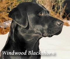 _WindwoodBlackthorn